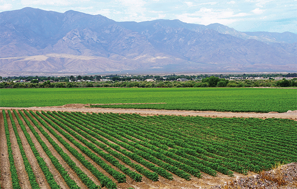 Safford's comprehensive groundwater management program includes following at least 200 acres annually, retaining an estimated 480 acre-feet of water in the Gila River riparian habitat.