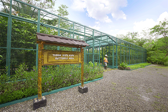 The PTFI Butterfly Sanctuary allows students and community the opportunity to learn about the diversity and life-cycle of lepidopterans and see how butterflies and other pollinators play a key role in the propagation of economically important crops.